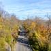 Sim Hodgins Parkway