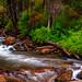 "Little Falls Big Cottonwood canyon by Scott Stringham ""Rustling Leaf Design"""