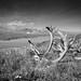 8_Denali NP-2976-2 by Richard Vernier