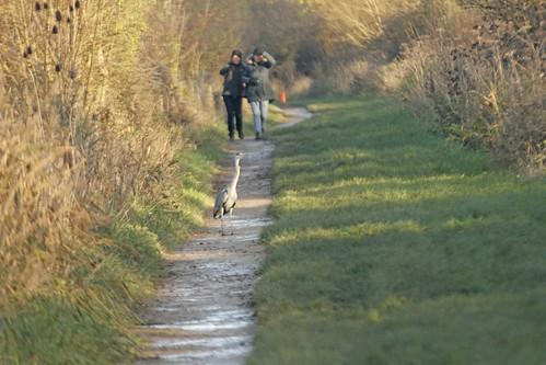 Heron on the path!