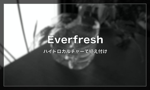 Everfresh_Rhizog_eye