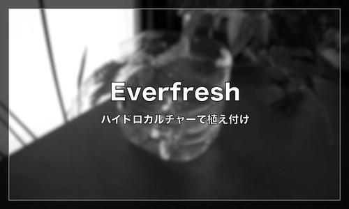 Everfresh_Rhizog_eye