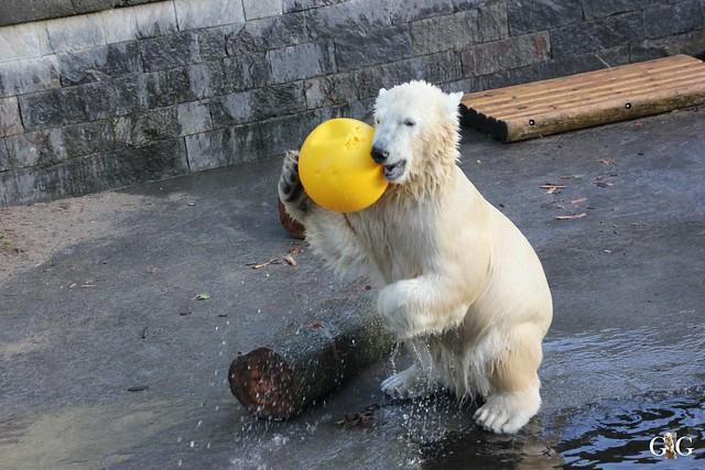 Besuch Zoo Rostock 12.12.201561