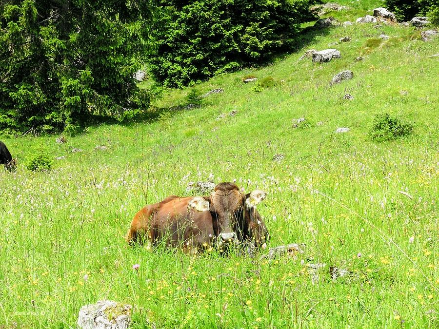 Ragoli, Trentino, Trentino-Alto Adige, Italy, 0.002 sec (1/640), f/5.5, 2016:06:30 10:41:46+03:30, 17.9 mm