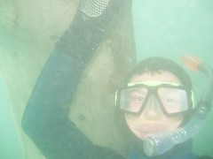 Greg in Snorkelling in St. Justinians Bay Image