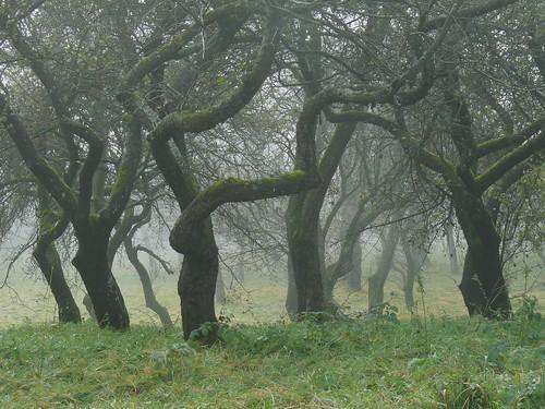 Alter Obstgarten in Hochstraß