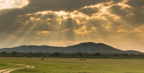 minneriyawewa srilanka sunset northcentralprovince