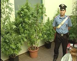 Conversano_ coltiva marijuana in casa_arrestato