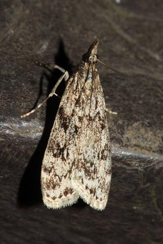 Moth 2149
