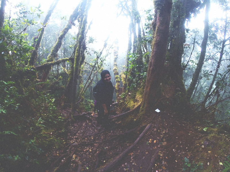 mount irau mossy forest (12)