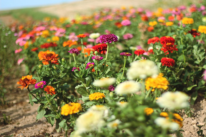 Gewächshaus und Blumeln 014gimp