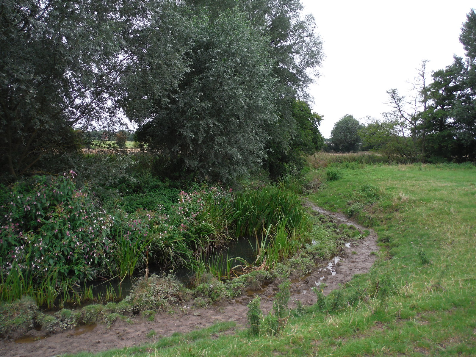 The Ash River SWC Walk 164 Roydon to Sawbridgeworth via Henry Moore Foundation