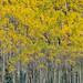 Colorado Autumn Color by ER Post