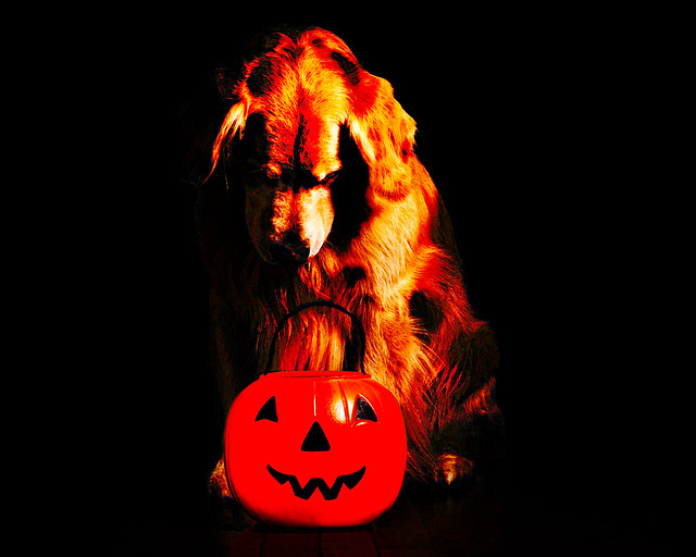 Halloween Needs
