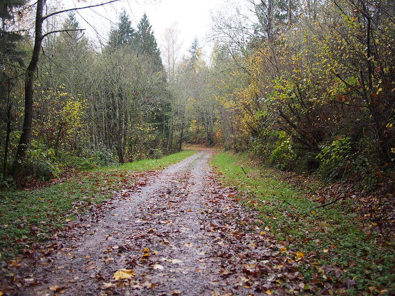 Path to Snoqualmie Valley Trail: I've heard of a way to get to the Snoqualmie Valley Trail from Fall City, but hadn't thought of it until planning this.  Aside from having to work hard to get around the gate due to some badly-placed logs (which caused a deep puddle to form), it was a nice route.  Going downhill was a bit nerve-racking due to the thick buildup of leaves.