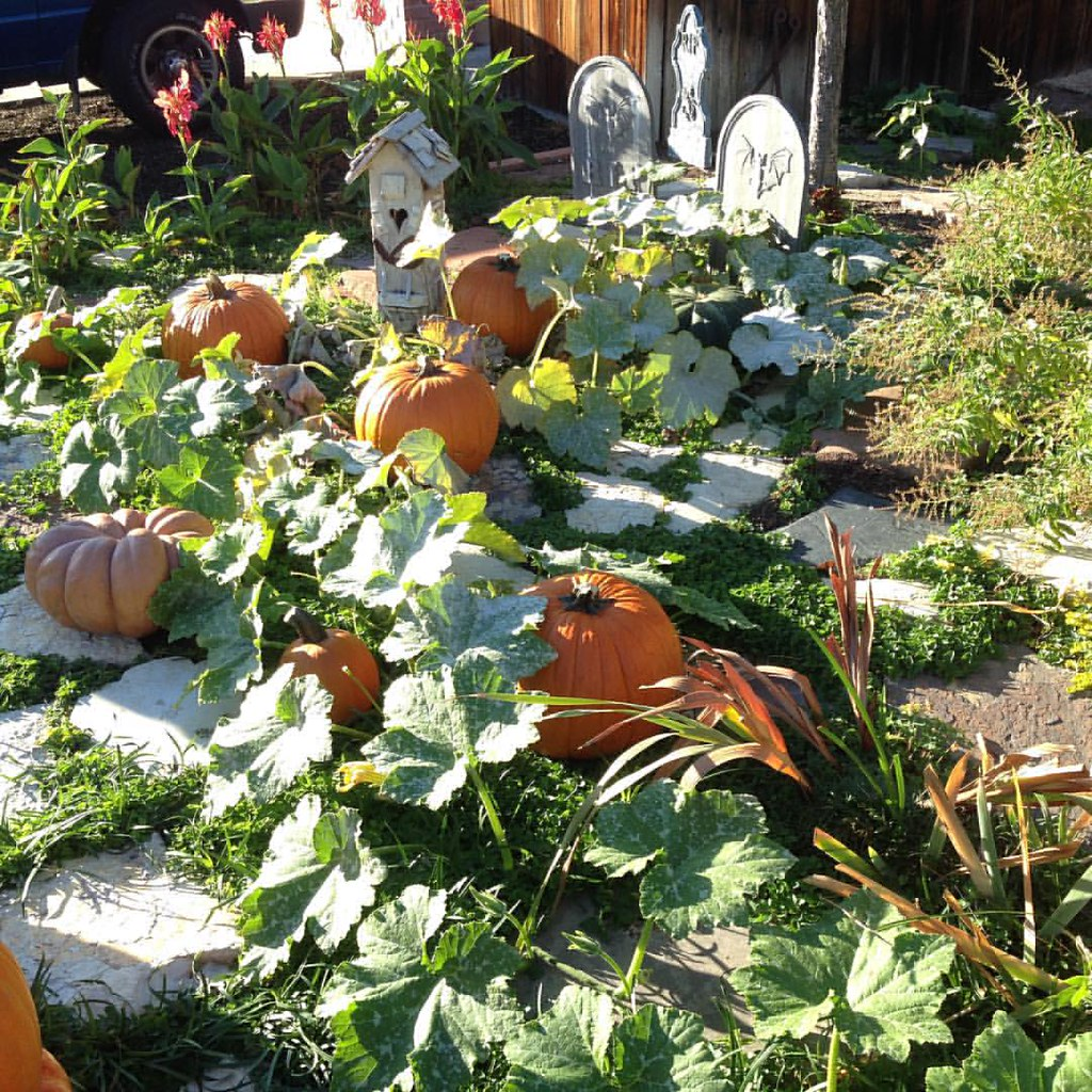 My very own #pumpkinPatch