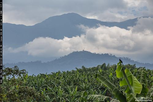 landscape colombia quindio