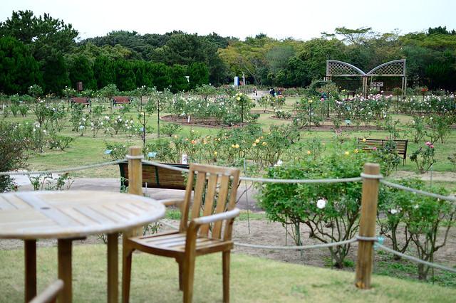 バラ園_海の中道海浜公園 Rose garden