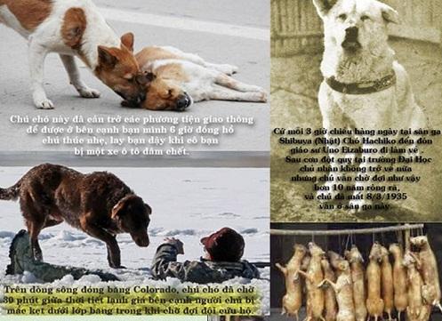 Hành nghề giết chó nhận quả báo mất mạng, con cái ăn chơi hư hỏng nghiện ngập