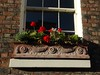 Window box of geraniums