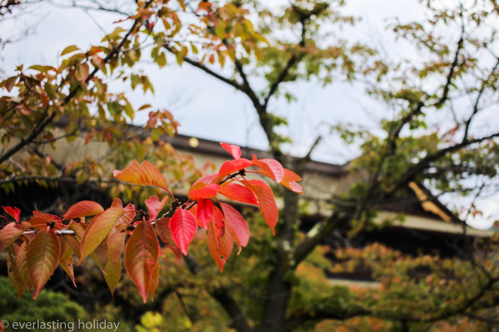 善光寺 Zenkoji Temple-0001