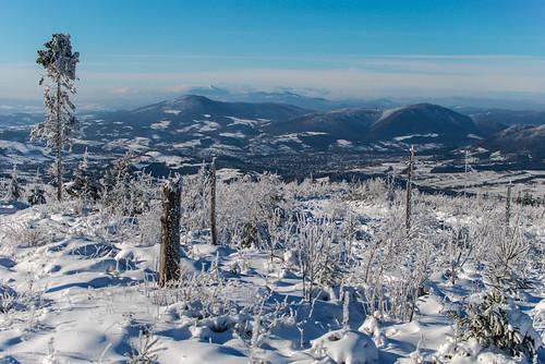 las trees winter white snow mountains grass forest island frozen woods meadow poland polska zima góry carpathians hala śnieg babia góra trawa drzewa łąka beskid karpaty luboń wyspowy wielki ćwilin szczebel beskids
