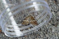 HolderRivulet, St Bees, Cumbria, England