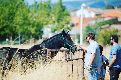 Hablando con los animales! #caballo #horse #amigos #alcoba #igersciudadreal #castillalamancha