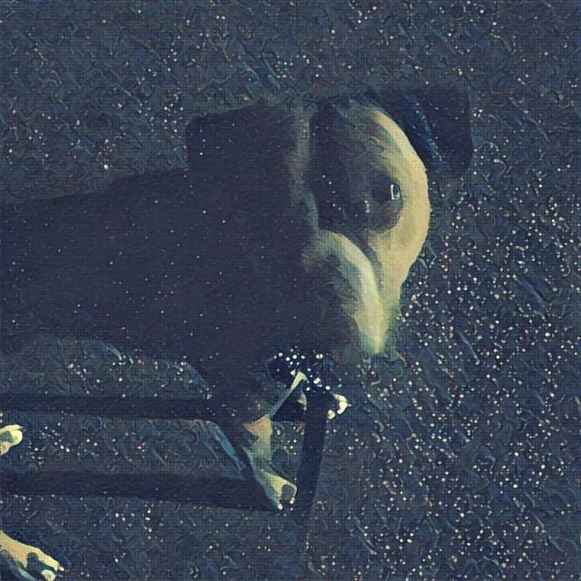 He let me sleep in until 6am. #dogs #boxerdog #darkoclock #walkingwiththomas #prisma