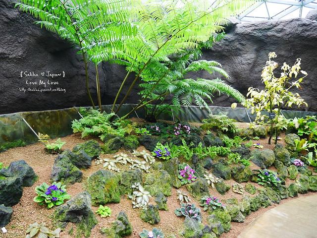 日本東京景點新宿御苑溫室植物 (7)