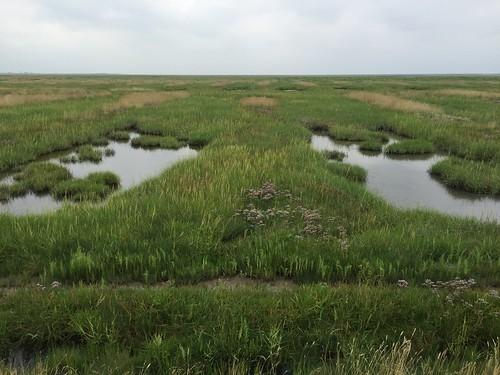 Salzwiesen  / Salt marsh