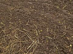 agriculture, field, soil, mulch,