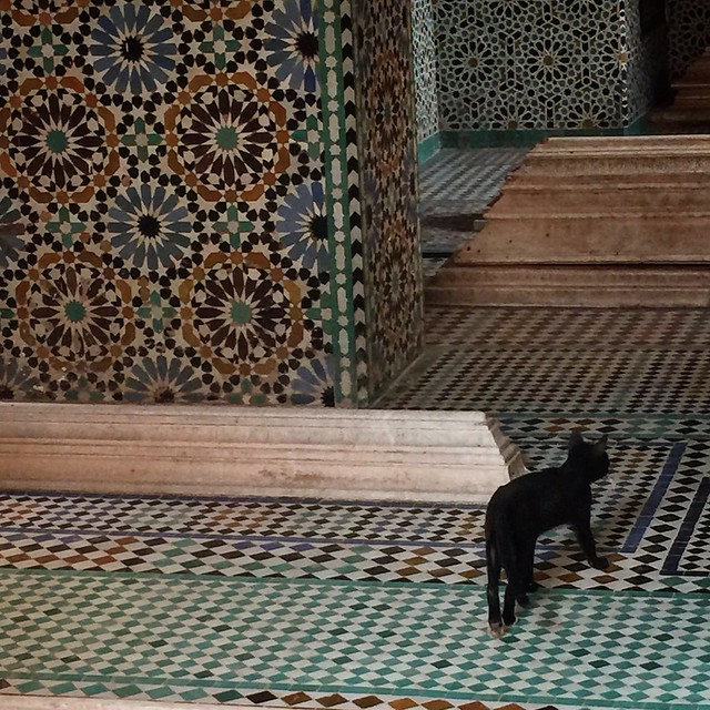 Only the cats can walk on the tombs
