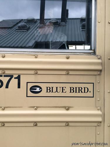 denali_bluebird_web