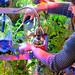 tending to Farm Fountain 3 by Amy M. Youngs
