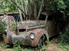 Tree Car at Old Car City by Alpha Amateur