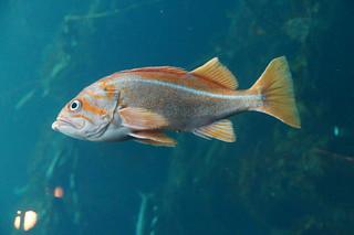 417 Aquarium Sea Life Center