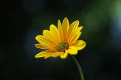 Flowers . Close-ups