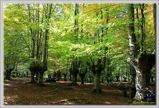Hayedo de Presazelay (9)