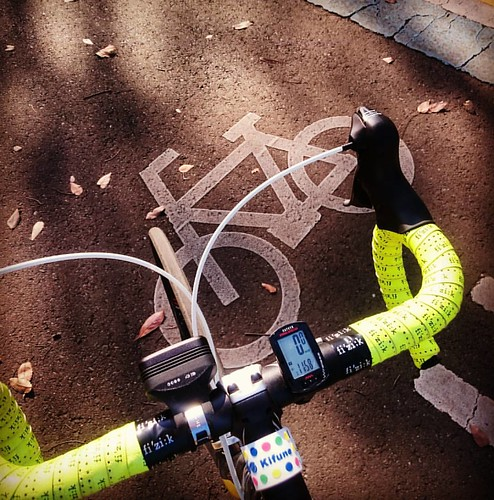 サイクリングロードあるけどランナーばかり。あと紅葉はやっぱ無理だった。。