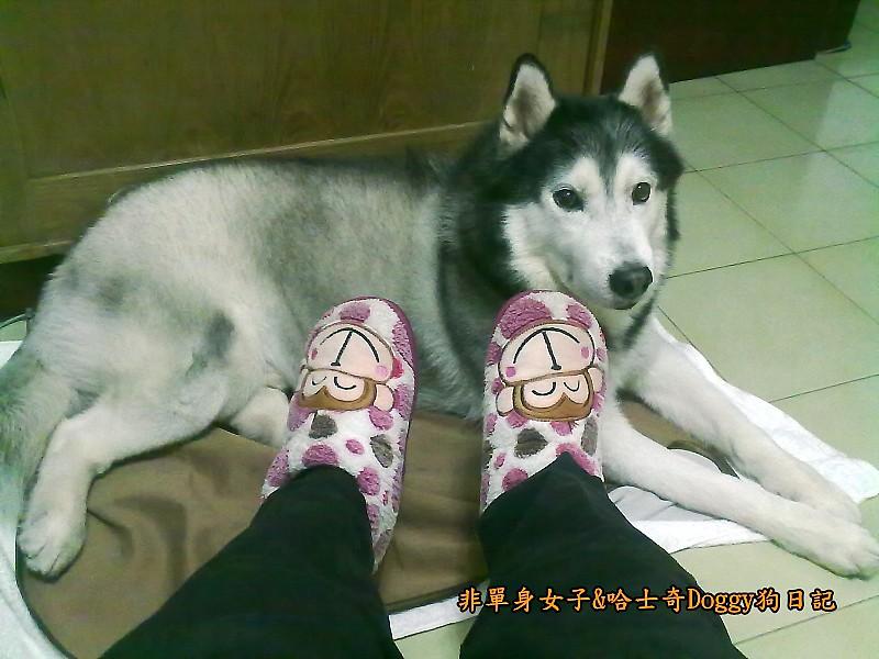 Doggy穿兒童襪14