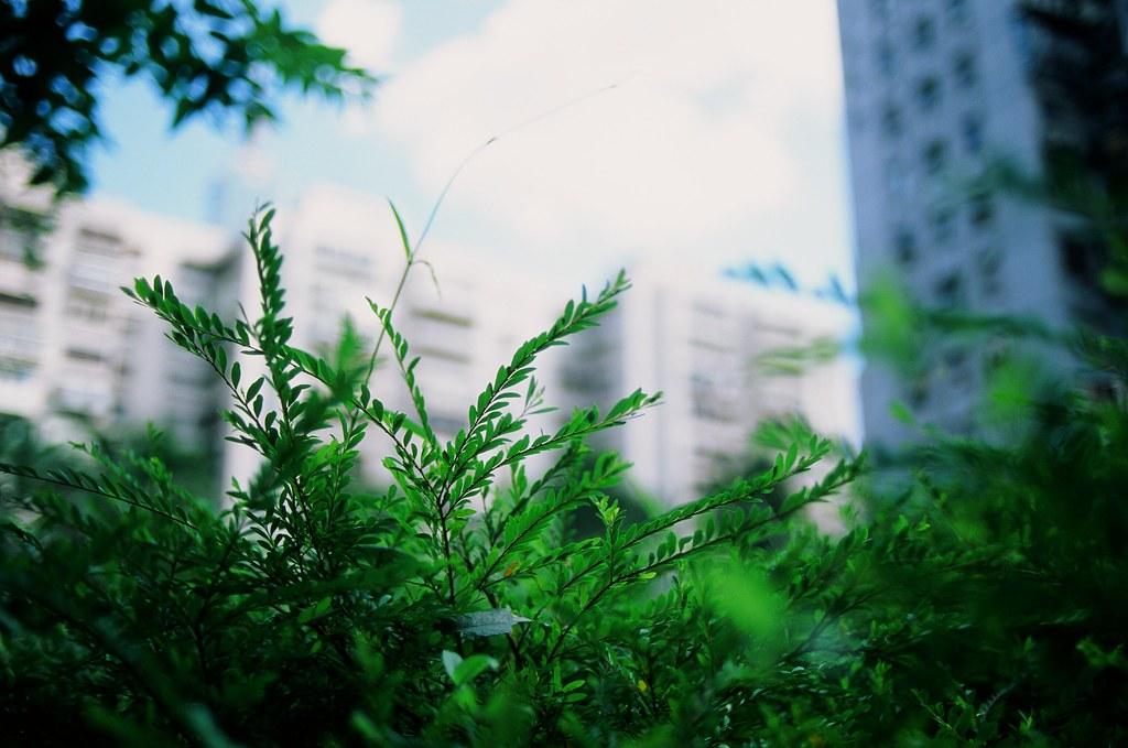 像葉子這樣深呼吸吧! / 台北 Taipei / RVP50 2015/11/06 把眼淚收起來,像葉子這樣深呼吸吧!  Nikon FM2 FUJICHROME Velvia 50 3062-0023 Photo by Toomore