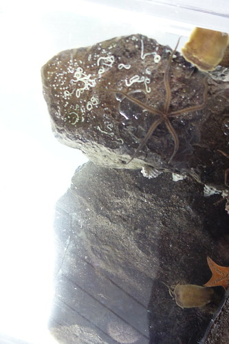 zeiss t aquarium jellyfish sony cybershot carl kamo yamagata variosonnar f1849 dscrx100 104371mm