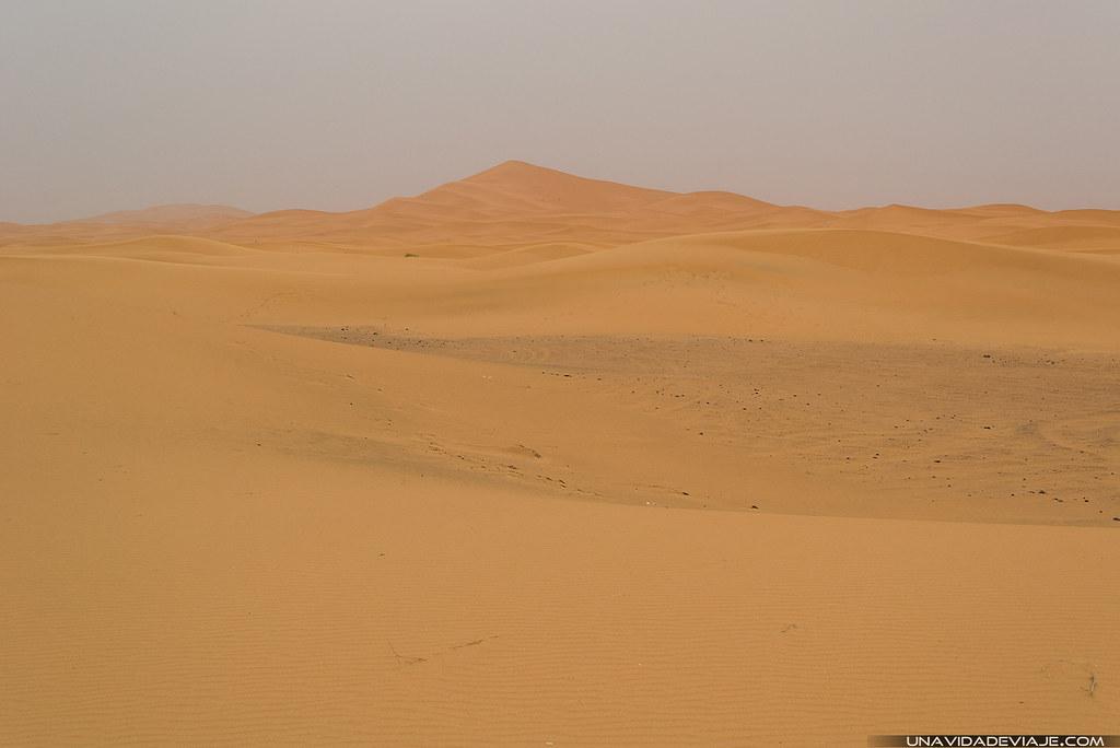 Marruecos sur desierto camellos
