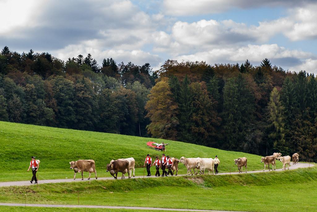 Degersheim: Viehschau