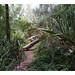 jungle fever by -klik-