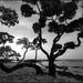Kukio Monochrome by Rob Millenaar