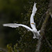 Great Egret in Algonquin by Wildside Photography by CJM