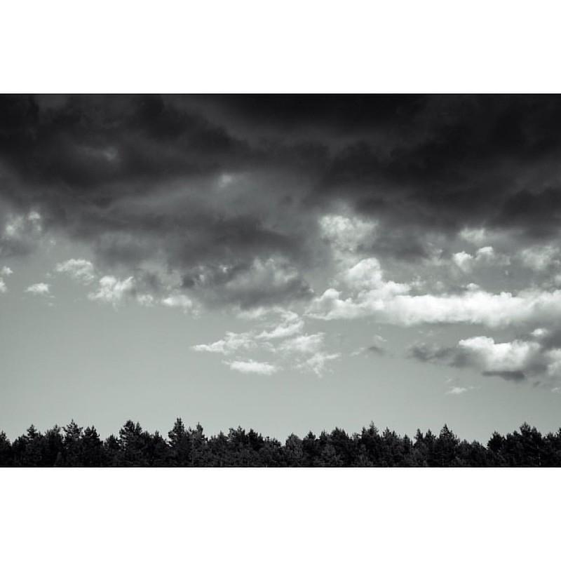 Bosque mixto de Europa central #Europa #bosque #forest #alytus #alytaus #blackandwhite #black #landscape #lituania