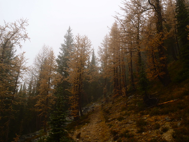 Trail and Larch